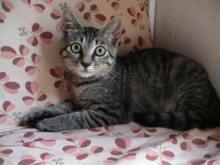 猫にSweets-ブリちゃん