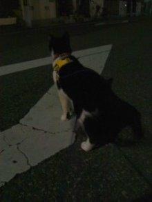 猫にSweets-夜の散歩