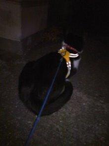 猫にSweets-100727_2230~01.jpg