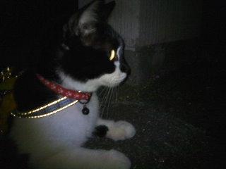 猫にSweets-100727_2244~01.jpg