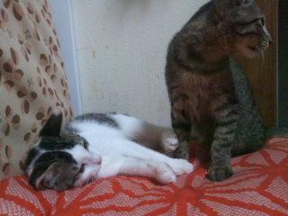 猫にSweets-かんぱちとブリ