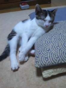 猫にSweets-かんぱち~
