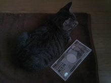 猫にSweets-100801_1454~01.jpg