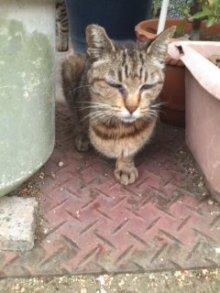 猫にSweets-手無しさん