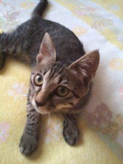 猫にSweets-100807_1103~01.jpg