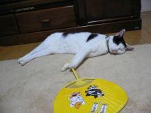 猫にSweets-うしこさん