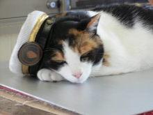猫にSweets-たま駅長