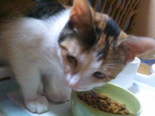 猫にSweets-肉食系女子
