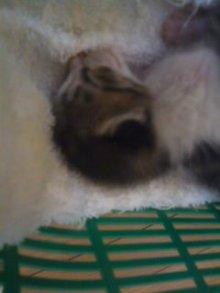 猫にSweets-100828_1442~01.jpg