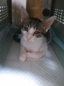 猫にSweets-100825_2342~01.jpg