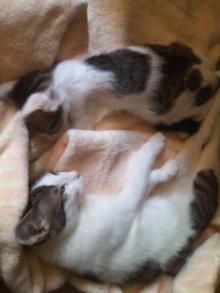 猫にSweets-100901_1706~01.jpg