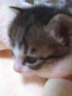 猫にSweets-100912_2153~01.jpg