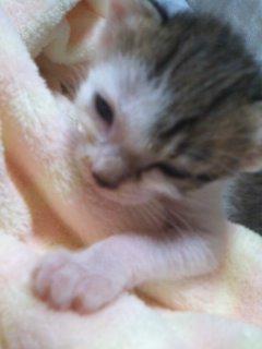猫にSweets-100912_2158~02.jpg