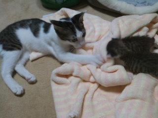 猫にSweets-100912_2206~01.jpg