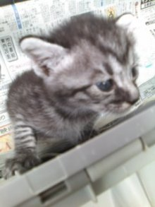 猫にSweets-100914_1051~01.jpg