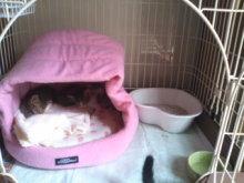 猫にSweets-100924_1136~01.jpg