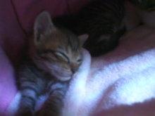 猫にSweets-100924_1133~01.jpg