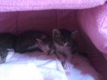 猫にSweets-100924_1137~01.jpg