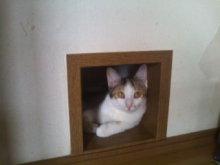猫にSweets-100924_1139~01.jpg