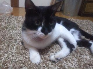 猫にSweets-100919_2156~02.jpg