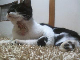 猫にSweets-100919_2156~01.jpg