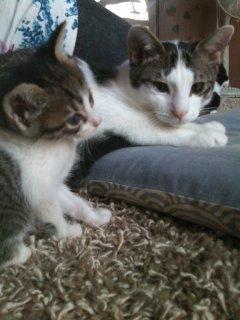 猫にSweets-100925_1716~01.jpg