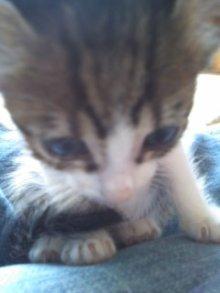 猫にSweets-100928_1457~02.jpg