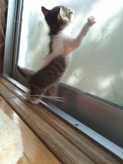 猫にSweets-100928_1449~01.jpg