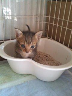 猫にSweets-100929_1113~01.jpg