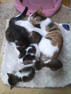 猫にSweets-100930_1642~01.jpg