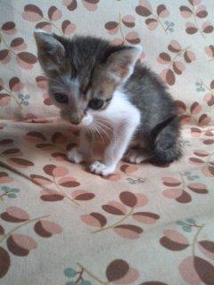 猫にSweets-100928_1429~01.jpg