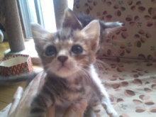 猫にSweets-101003_0908~01.jpg