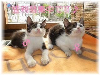 猫にSweets-里親募集