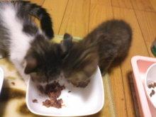 猫にSweets-101007_1736~01.jpg