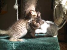 猫にSweets-101010_1226~01.jpg