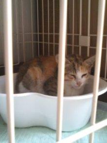 猫にSweets-101012_0951~01.jpg