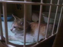 猫にSweets-101013_2136~01_0001.jpg