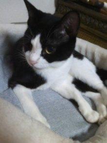 猫にSweets-101021_2258~01.jpg
