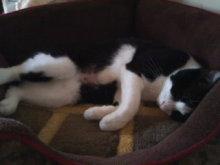 猫にSweets-101021_1110~01.jpg