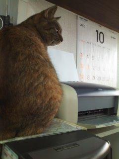 猫にSweets-101022_1317~01.jpg