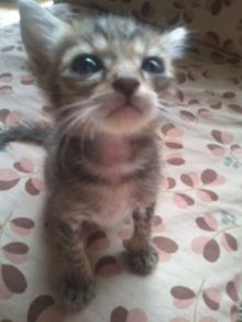 猫にSweets-101003_0910~01.jpg