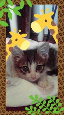 猫にSweets-2010101713250000.jpg