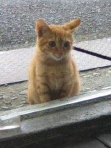 猫にSweets-100927_1539~02.jpg