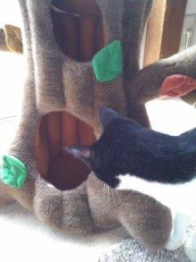 猫にSweets-101026_1241~02.jpg