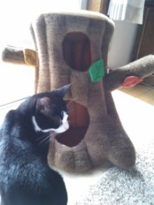 猫にSweets-101026_1241~01.jpg