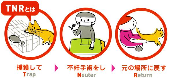 猫にSweets-TNR