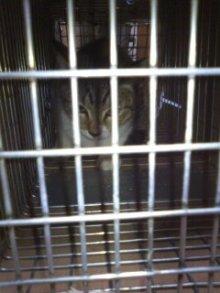 猫にSweets-101027_1823~01.jpg
