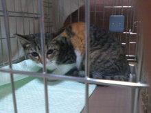 猫にSweets-101028_1908~02.jpg