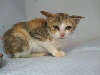 猫にSweets-101106_1118~01.jpg