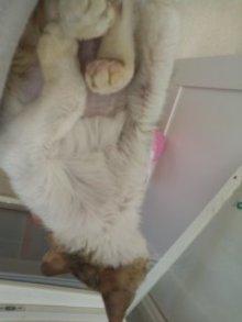 猫にSweets-101106_1117~01.jpg